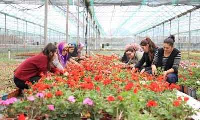 """Muğlalı çiftçiye alım garantili """"süs bitkisi"""" desteği"""