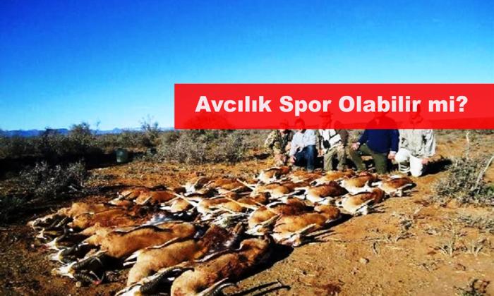 Avcılık Spor Sayılmalı mı?